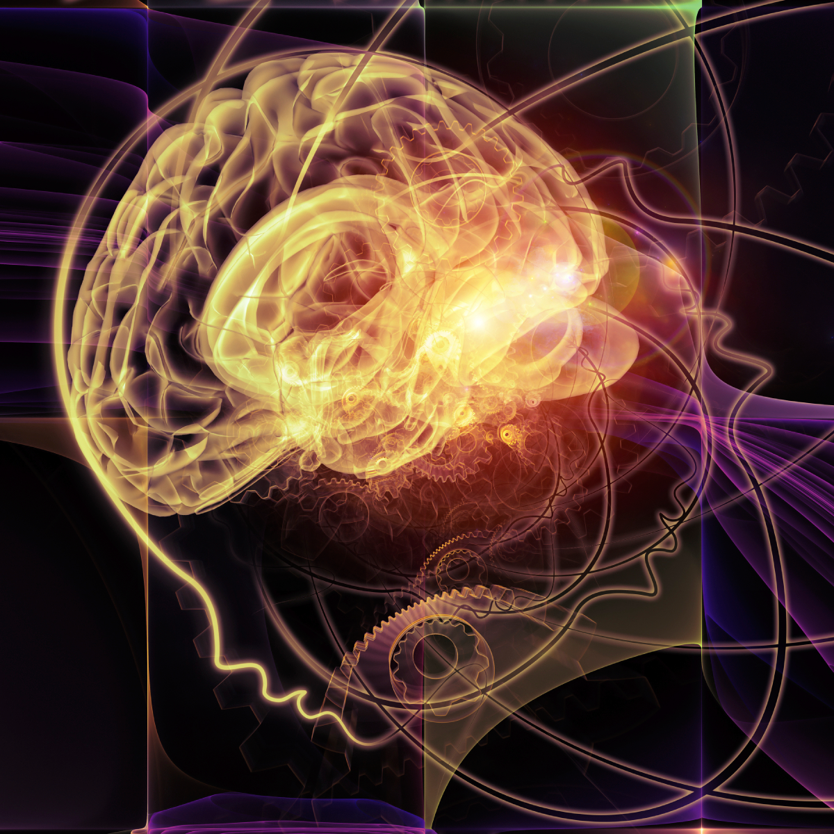certificate in the addicted brain